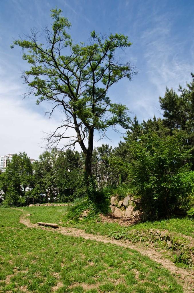 tree-path-DSC_5129