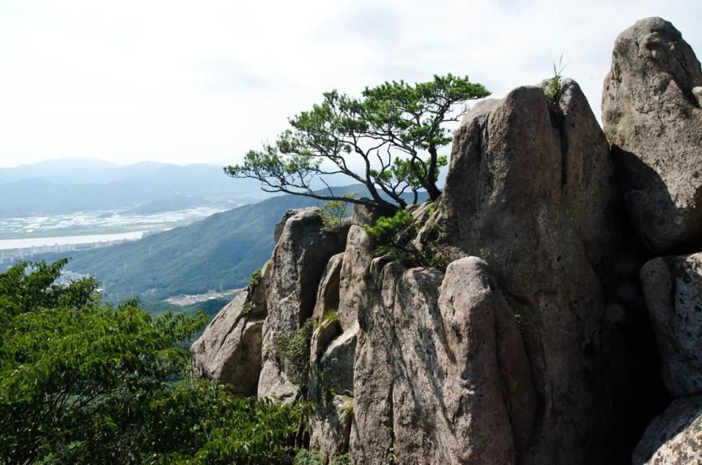 tree-rocks-DSC_7302