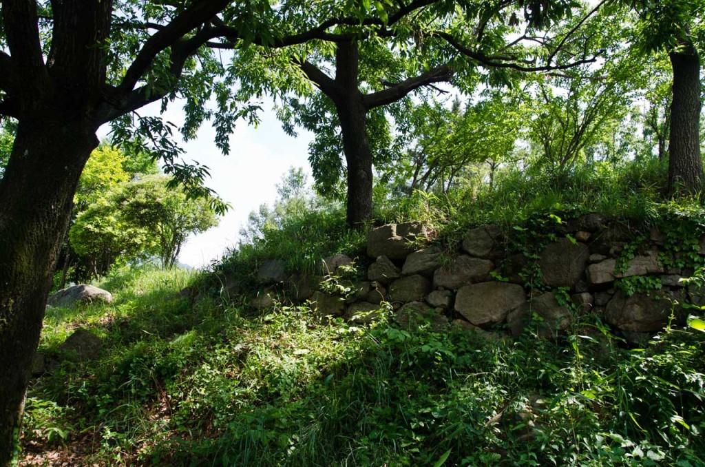 trees-DSC_5092