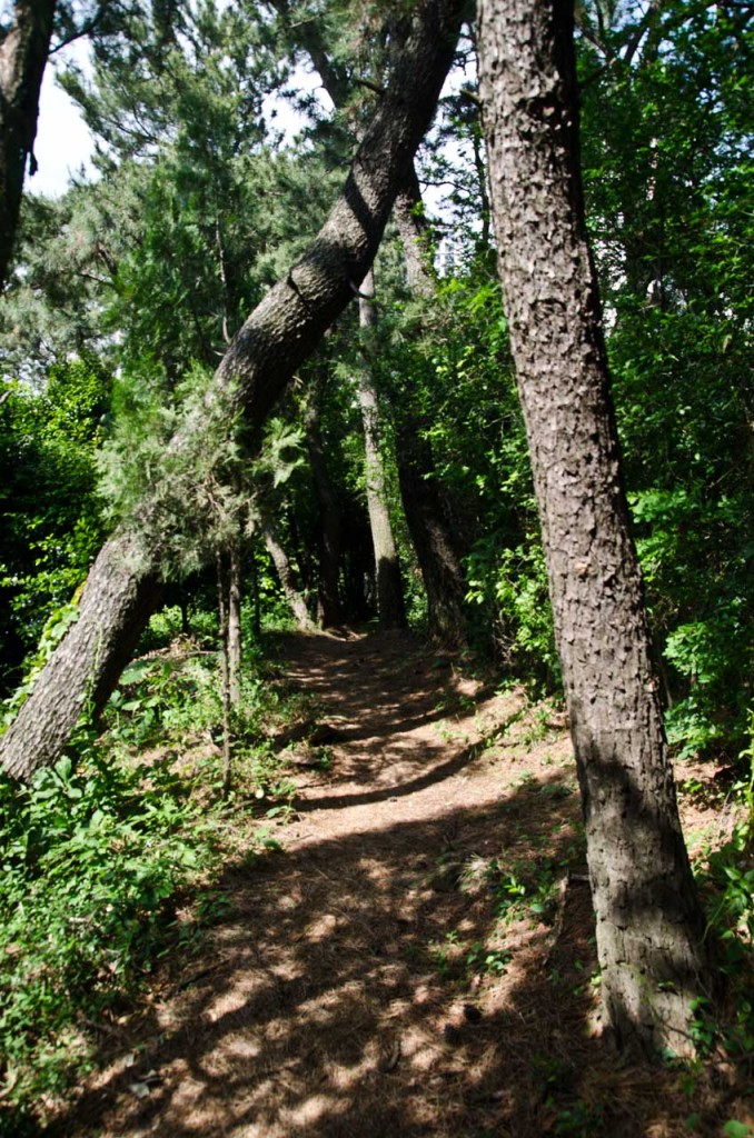 trees-path-DSC_5138