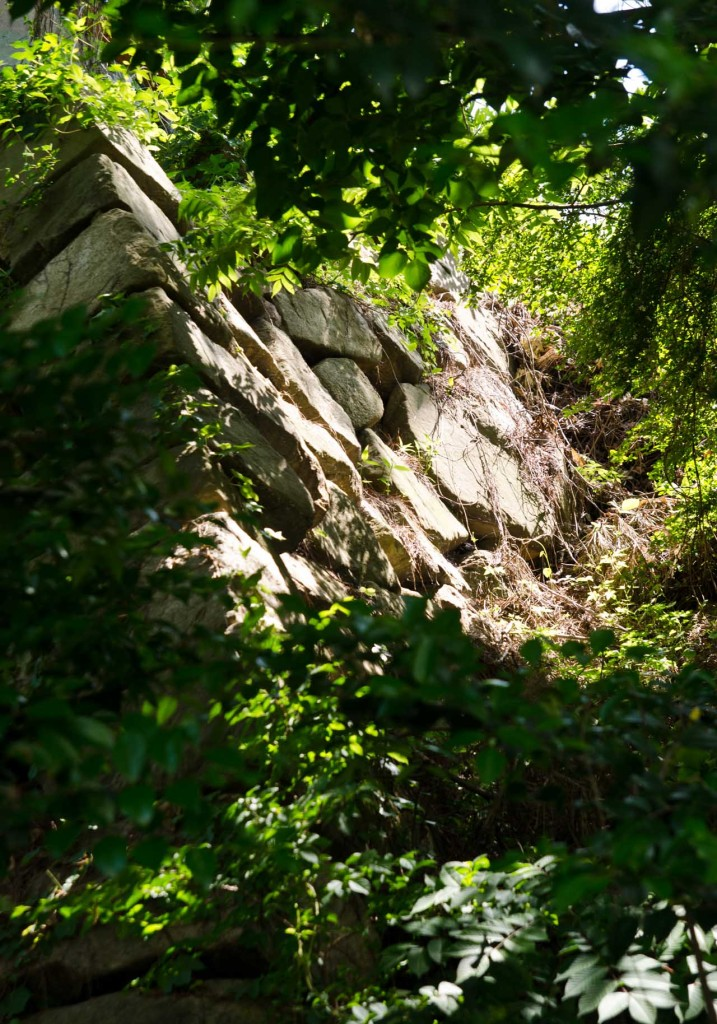 wall-bush-DSC_5115