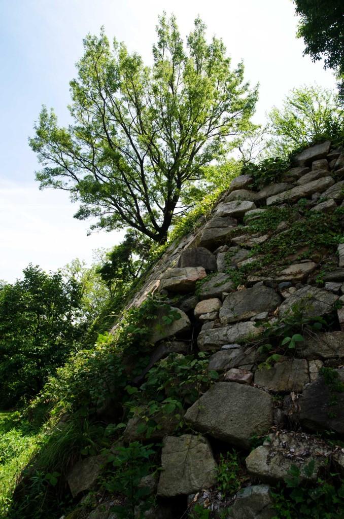 wall-gree-tree-c-DSC_5036