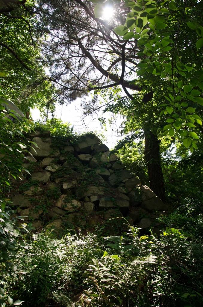 wall-sun-bush-DSC_5112
