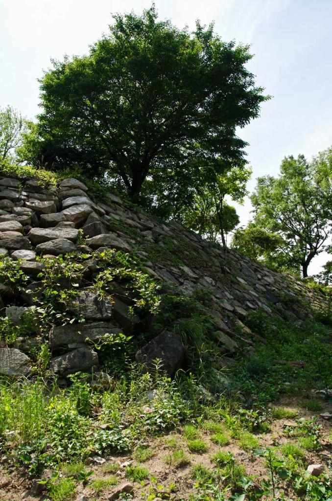 wall-tree-DSC_5032