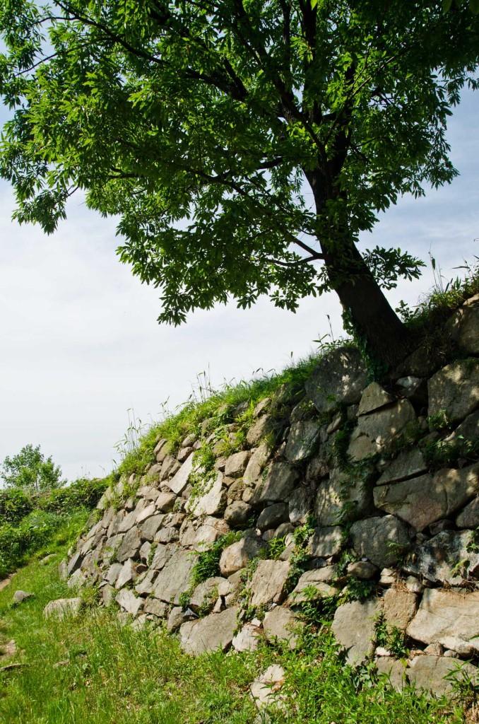 wall-tree-DSC_5064