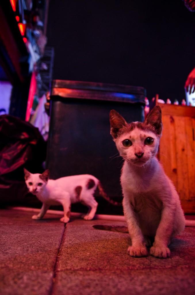 07-29-cats-bangkok-DSC_8605