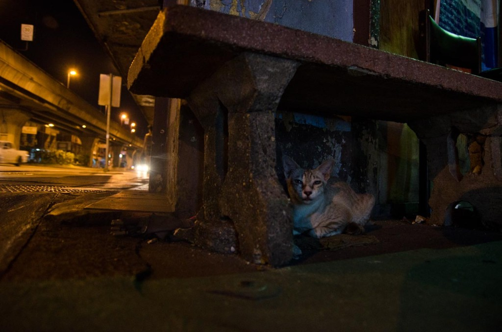 07-30-cats-DSC_8745