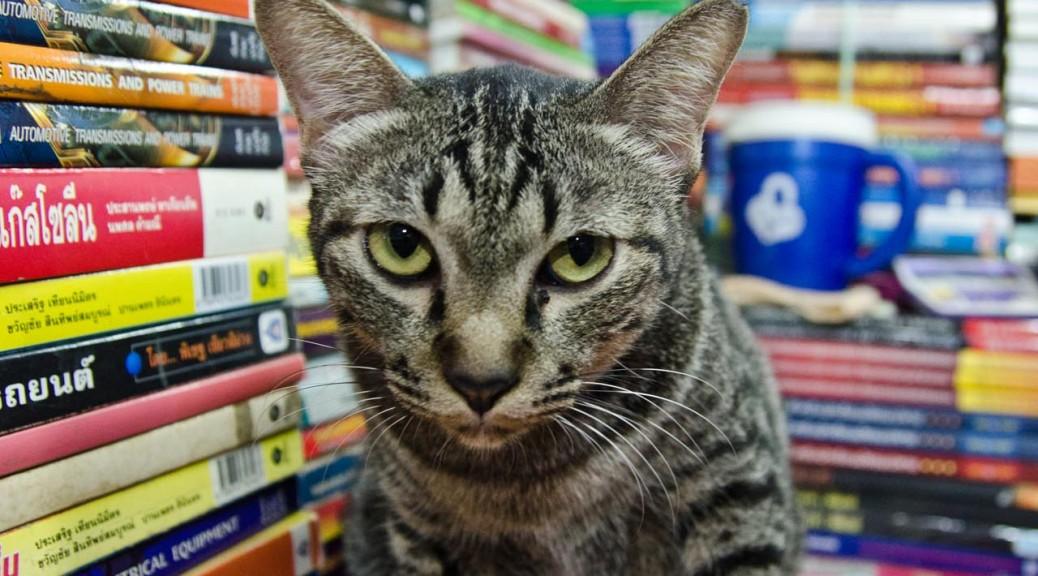 07-31-cat-DSC_8759