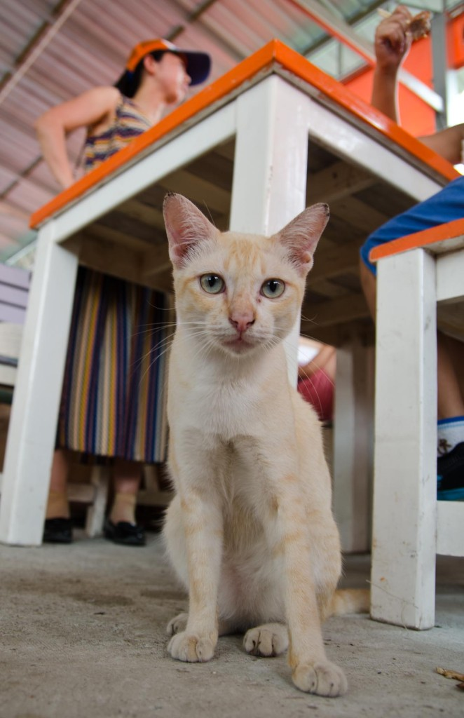 08-02-cat-DSC_9123