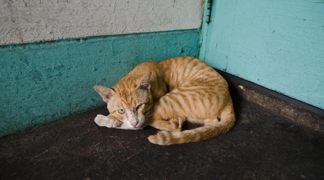 08-05-cat-DSC_9705