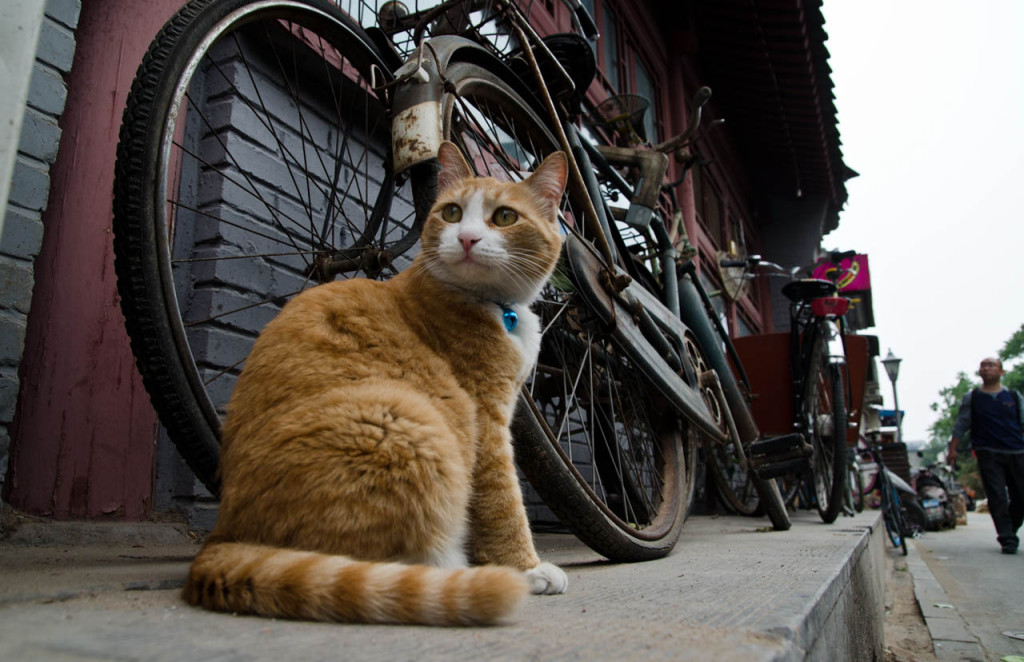 cat-beijing-may-DSC_5381