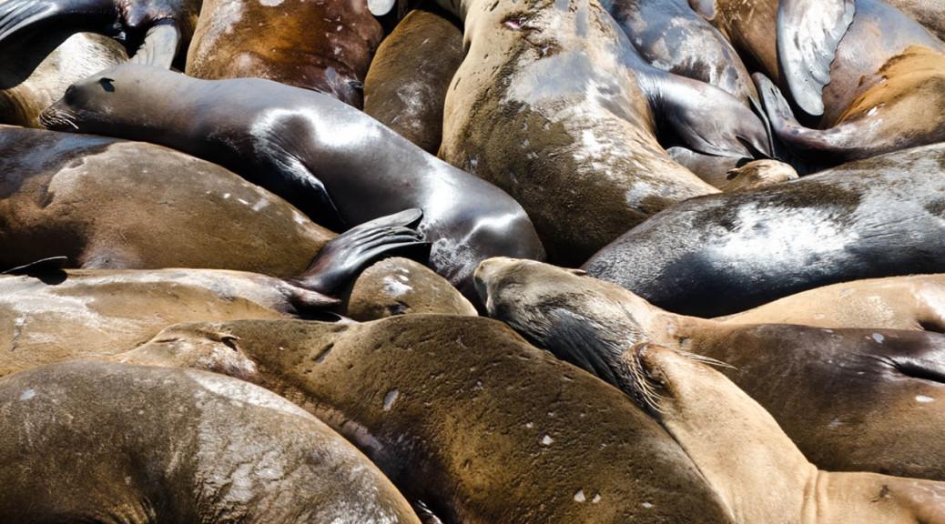 seals-may-28-DSC_5978