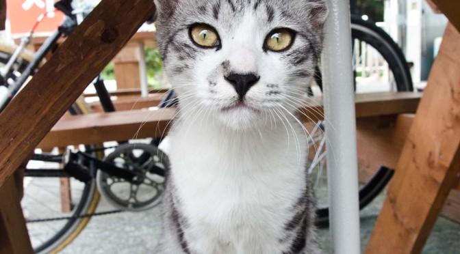 cat-yusan-9-15-DSC_0066