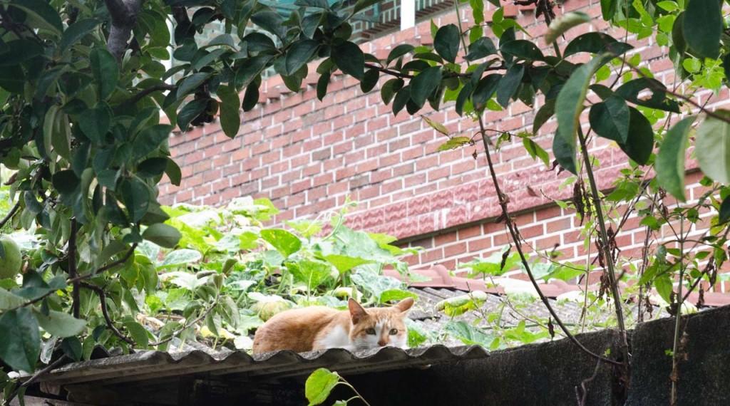 cat-DSC_0471