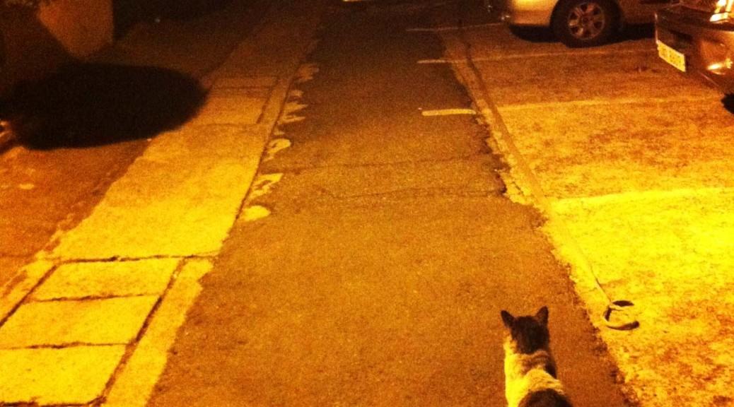 cat-feb-IMG_1343