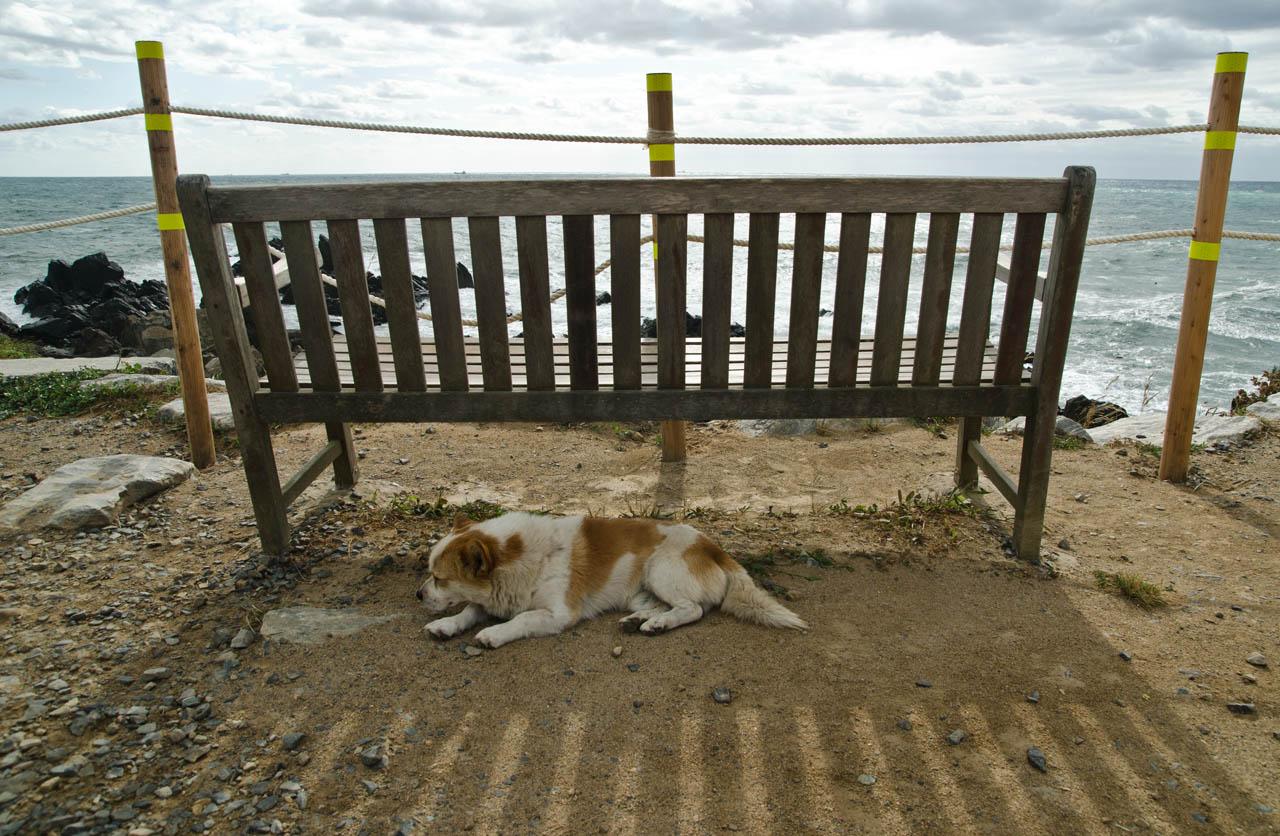 dog-aug-DSC_9928
