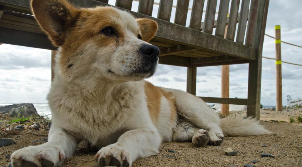 dog-aug-DSC_9933