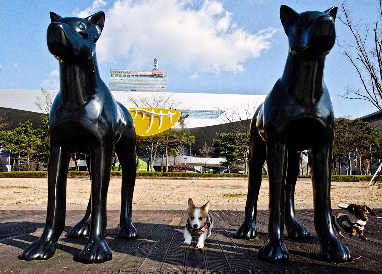 yolo-dogs-DSC_1080