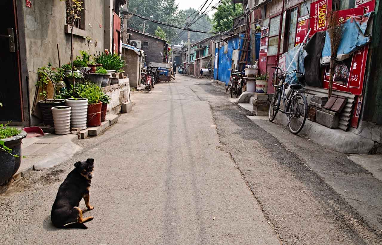 dog-road-hutong-bei-may1-16-DSC_3803