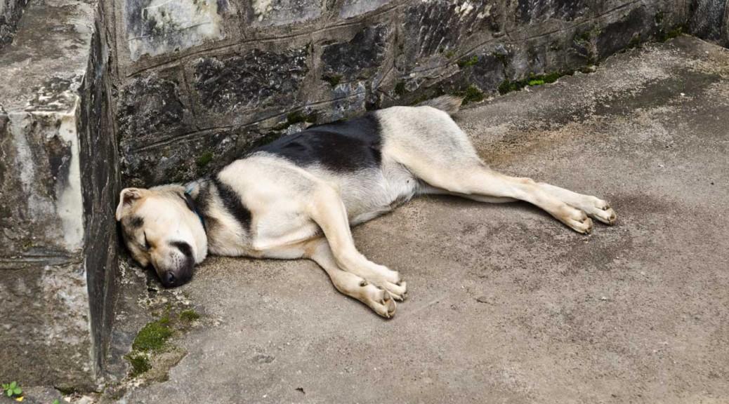 dog-DSC_3459