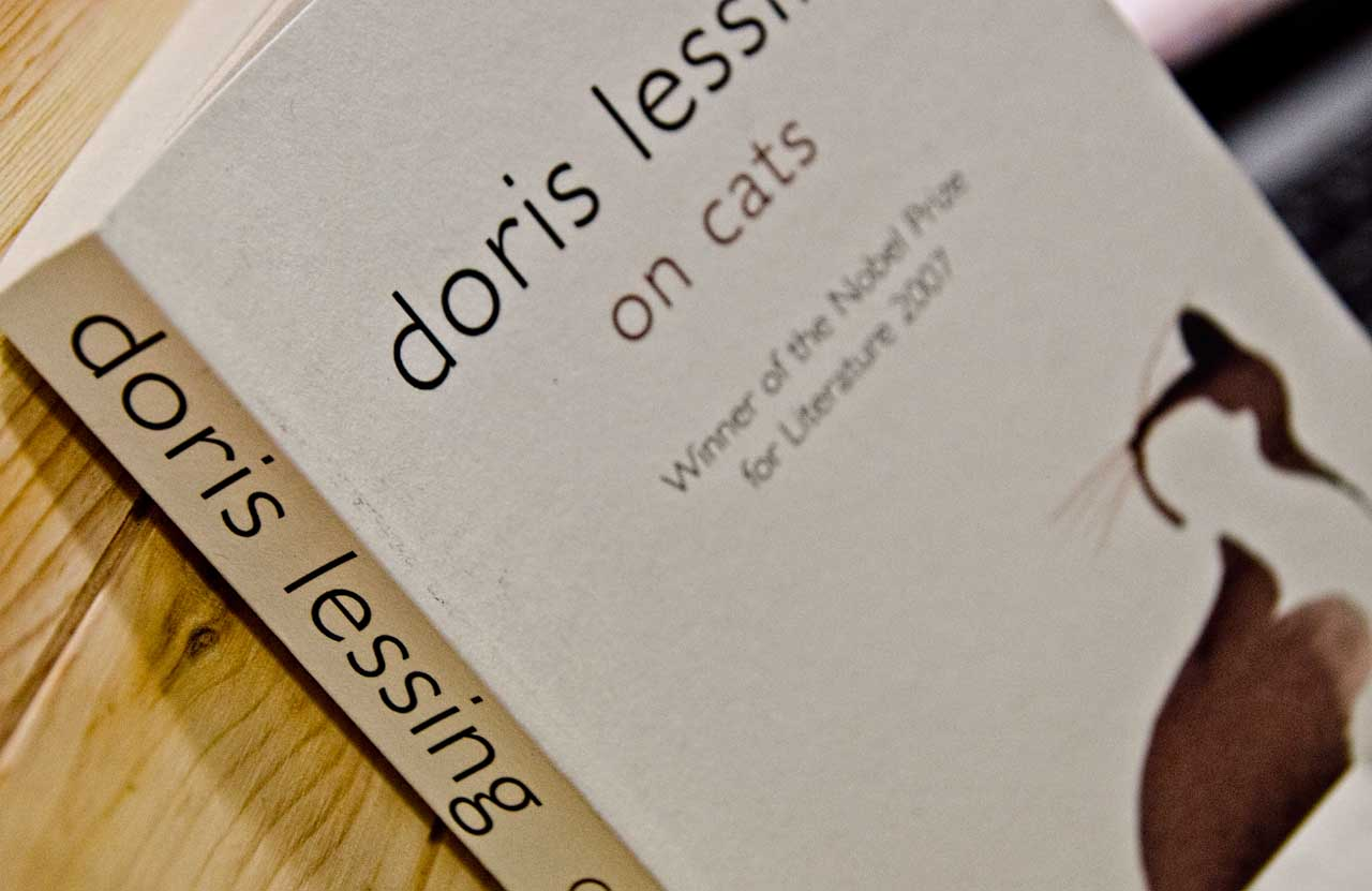 on-cats-DSC_1804