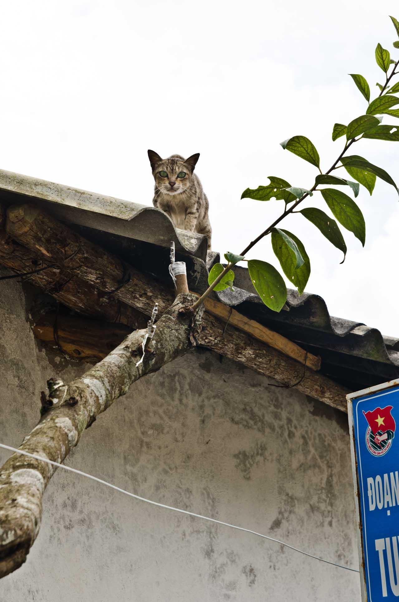 sapa-cat-DSC_3487