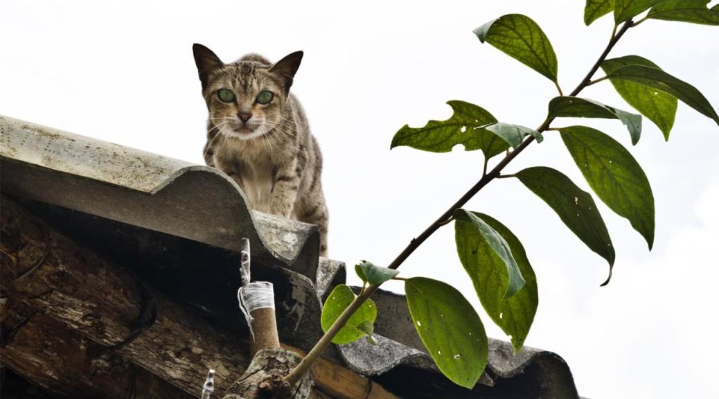sapa-cat-det-DSC_3487