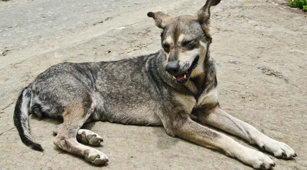 dog-DSC_3543