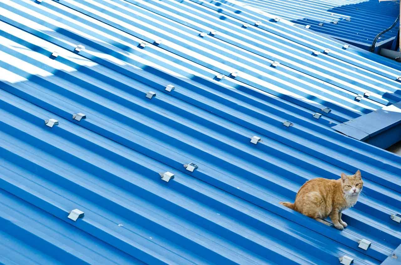 cat-may-DSC_1696
