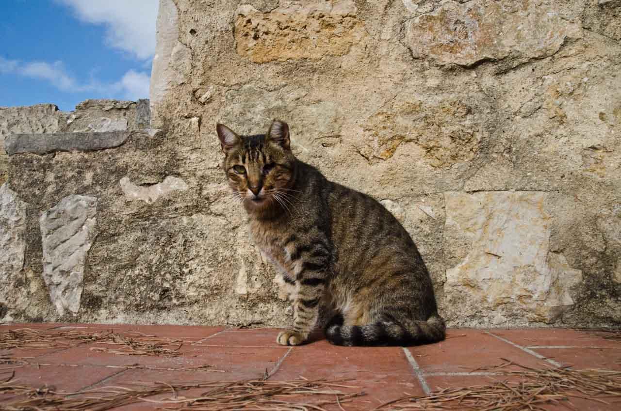 rei-dos-gatos-DSC_2011
